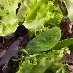 Πράσινη σαλάτα με βινεγκρέτ μουστάρδας